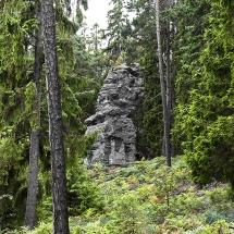 skog_ale1